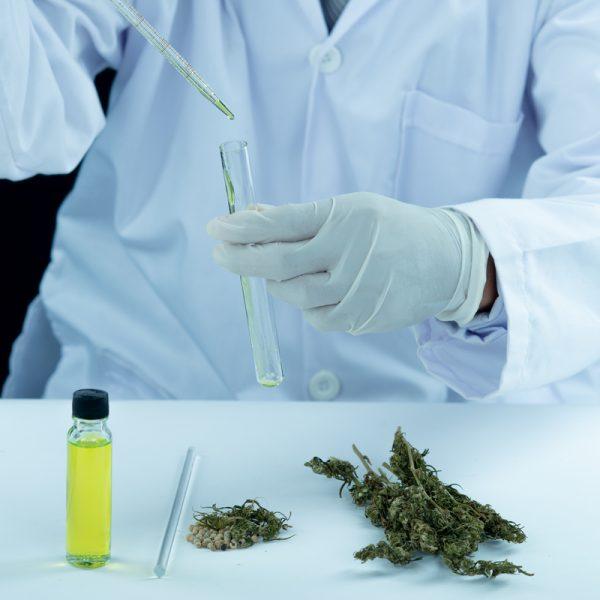 phd in Alternative Medicine